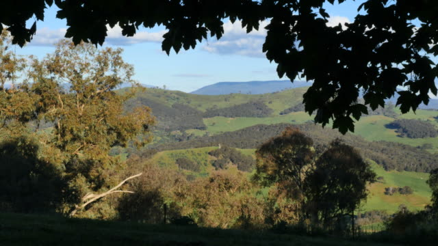 australia mt bellevue view framed with leaves - idyllic stock videos & royalty-free footage