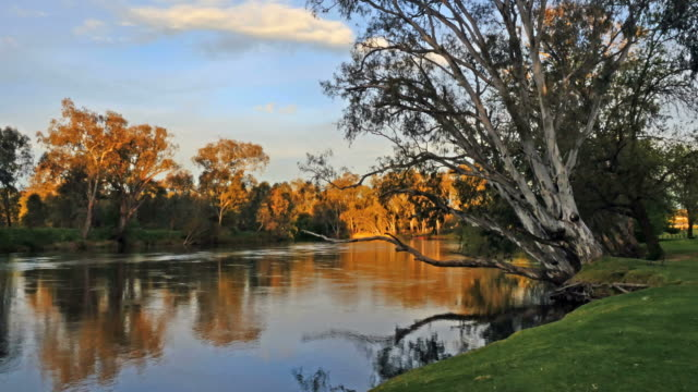 Australia Murray River at Albury between trees
