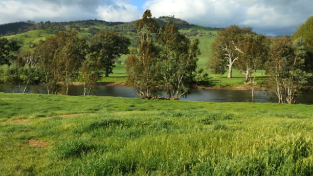 Australia Murray River in green countryside