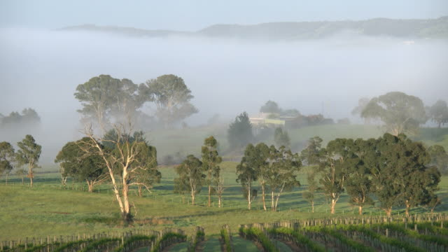 australia outlook hill trees and mist - vineyard stock videos & royalty-free footage