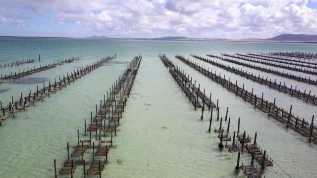 australia. south australia, coffin bay national park. - south australia bildbanksvideor och videomaterial från bakom kulisserna