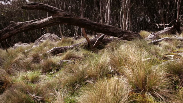stockvideo's en b-roll-footage met australian bush - mt macedon (hd) - wildernis