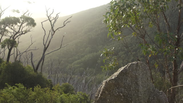 australian bush sunset - granite rock stock videos & royalty-free footage