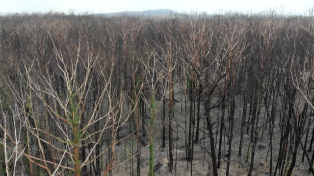 australian bushfire devastation - animal themes stock videos & royalty-free footage
