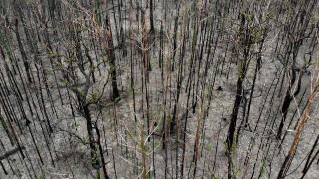 australian bushfire devastation - burnt stock videos & royalty-free footage