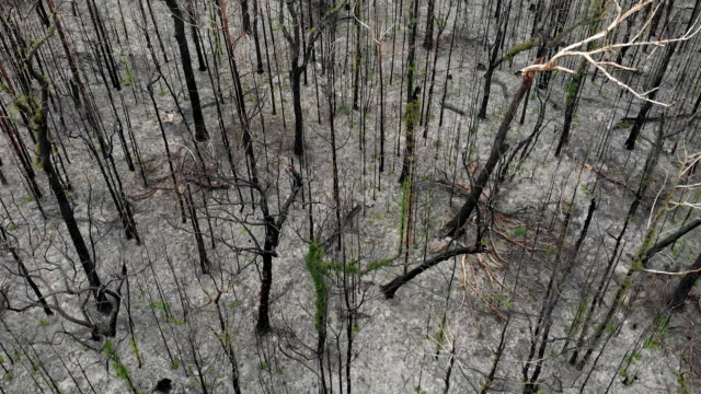 australian bushfire devastation - chaos stock videos & royalty-free footage