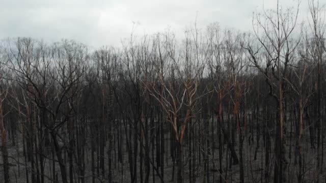 australian bushfire devastation - chaos stock videos & royalty-free footage
