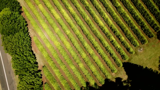 australian crops in line formations. aerial view - farm stock videos & royalty-free footage