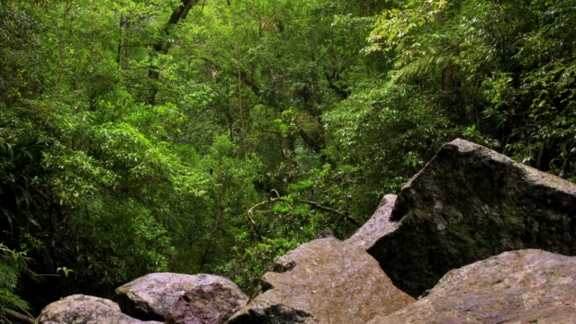 Australian Rainforest With Gently Waving Trees