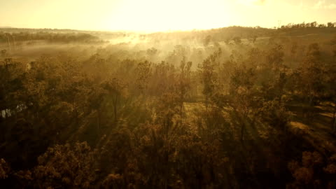 australian sunset above savannah - drone stock videos & royalty-free footage