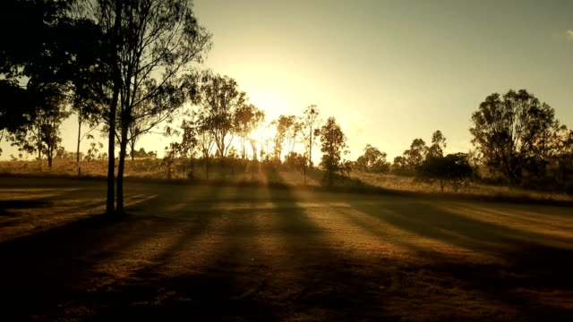 australian sunset above savannah - bush stock videos & royalty-free footage
