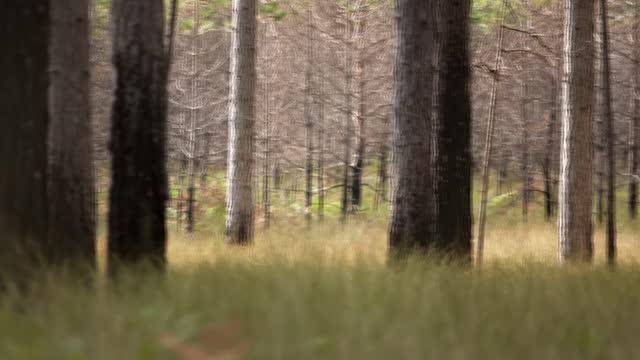 vídeos y material grabado en eventos de stock de australian wildfires released more co2 than annual emissions of germany, say scientists; location unknown : int dr ivan van der velde interview via... - tape measure