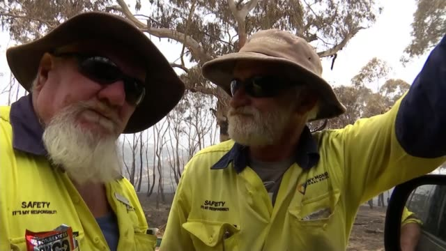 volunteers battle to save australia's animals as wildfires spread; australia; rescued koala, james fitzgerald interview, fire fighters, burnt trees... - bush stock videos & royalty-free footage