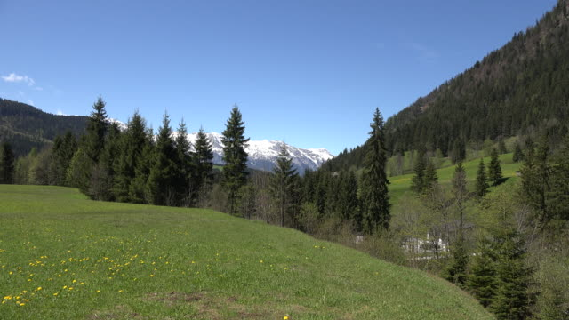 Austria view of lake with meadow and mountain