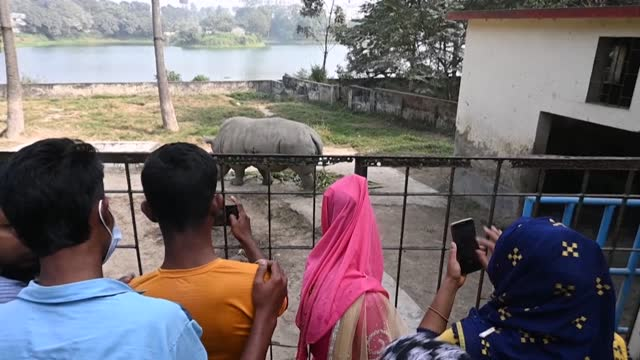 stockvideo's en b-roll-footage met authorities at bangladesh's largest zoo plans to import partners for lonely animals living out their lives in solitude at the bangladesh national zoo... - captive animals
