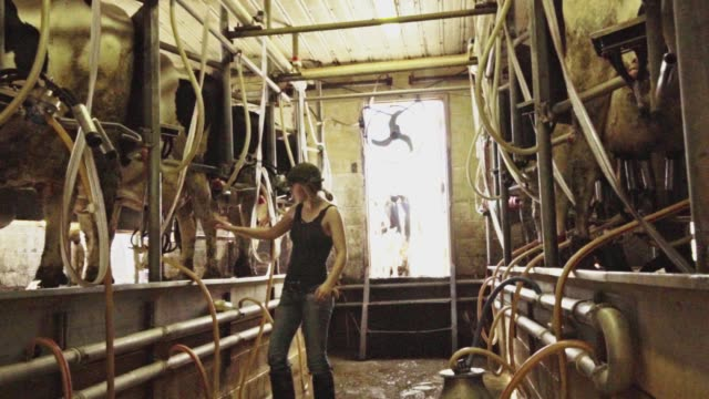 automated cow milking equipment - dairy product stock videos & royalty-free footage