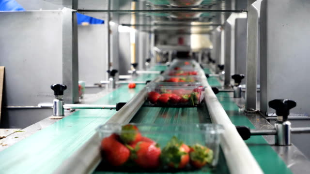 automated production line for package strawberries fruit in plastic containers. - factory stock videos & royalty-free footage