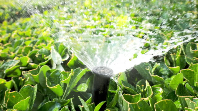 automatic fountain faucet in green leaves - sprinkler stock videos and b-roll footage