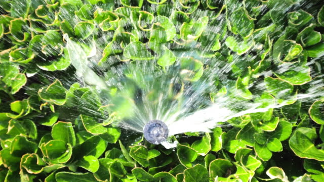 automatic fountain spray in green leaves