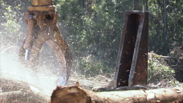 ms automatically  choping logs in  swamp and spraying wood splinters  / north carolina, usa - forestry industry stock videos & royalty-free footage