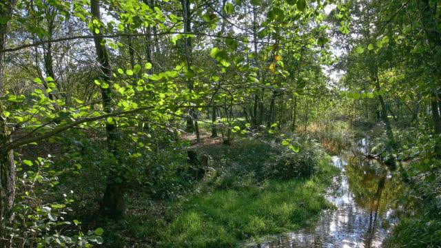 vidéos et rushes de automne nature and river - vincent pommeyrol
