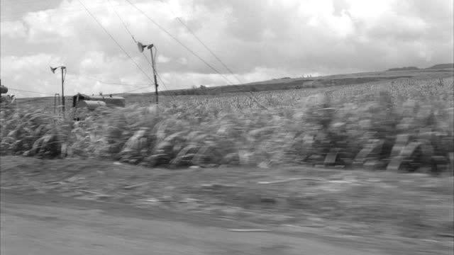 ws pov automobile moving on dirt road through sugar cane fields - 1959 stock videos & royalty-free footage