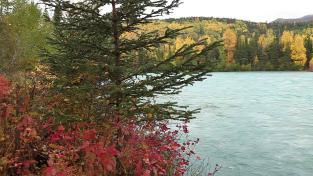 autumn along the kenai river, chugach national forest, alaska. - chugach national forest stock videos & royalty-free footage