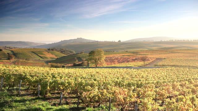 Autumn amongst the vineyards of Sancerre, France.