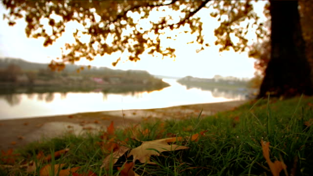 autumn and river - riverbank stock videos & royalty-free footage