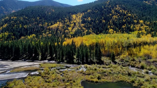 autumn aspen trees in the continental divide of colorado - colorado stock videos & royalty-free footage