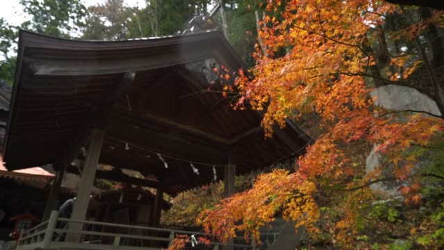 autumn at japan, maple is change the color to seasonal at november and leaf lighted up by sunshine in the garden. - kyoto temple stock videos and b-roll footage