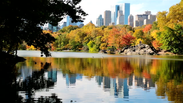 autumn at the lake in central park, new york city - central park manhattan stock videos and b-roll footage