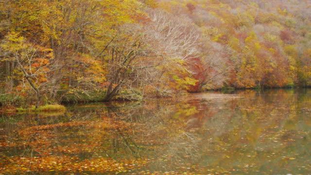 autumn at tsutanuma pond in aomori prefecture,japan - aomori prefecture stock videos & royalty-free footage