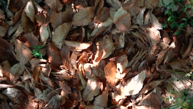 autumn background - leaves moveing by the wind with sunbeams above - audio disponibile sulla versione digitale video stock e b–roll