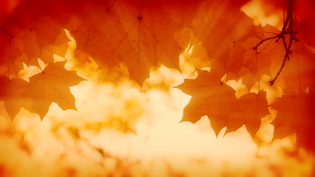 autumn background. - autumn leaf color stock videos and b-roll footage