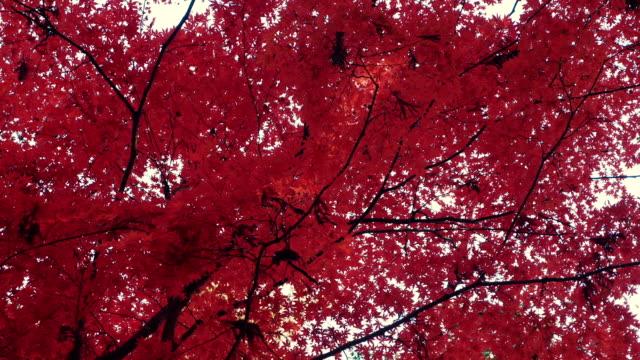 秋の背景 - 紅葉点の映像素材/bロール