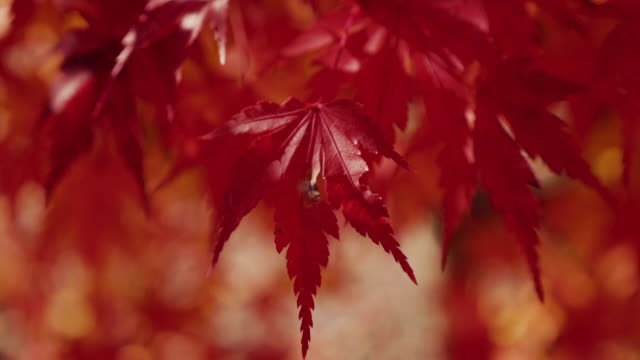 autumn background - autumn leaf color stock videos and b-roll footage