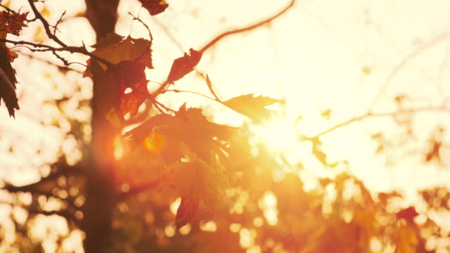 vídeos de stock e filmes b-roll de autumn, beautiful autumn leaves - outono