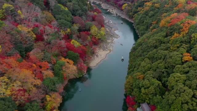 autumn beauty - kyoto prefecture stock videos & royalty-free footage