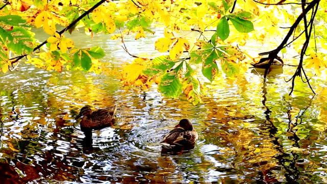 Herbst. Vögel Swimmingpool