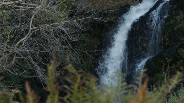 autumn bracken with a waterfall in the background - johnfscott stock videos & royalty-free footage