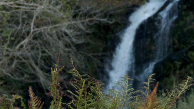 Autumn bracken with a waterfall in the background