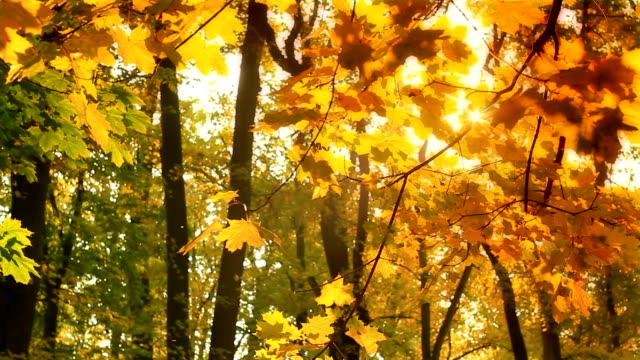 autunno branch in hd - foglia video stock e b–roll