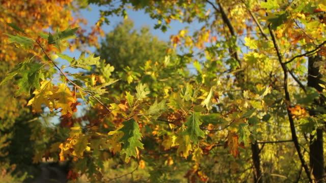 CRANE: Herbst Branch