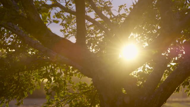 autumn breeze through the apple tree - apple tree stock videos & royalty-free footage