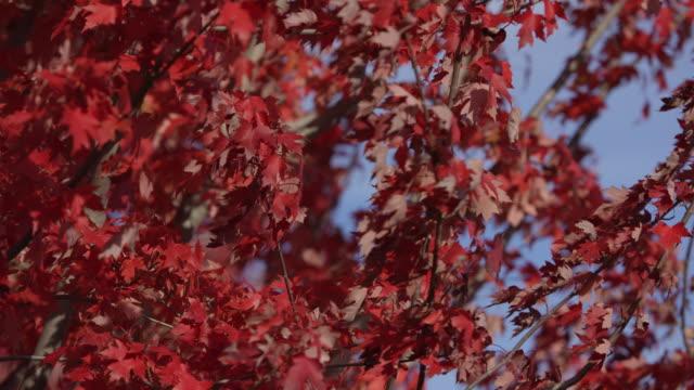 秋のそよ風 - 色が変わる点の映像素材/bロール