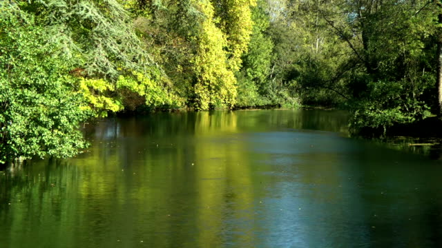 autumn by the river - backwater stock videos & royalty-free footage