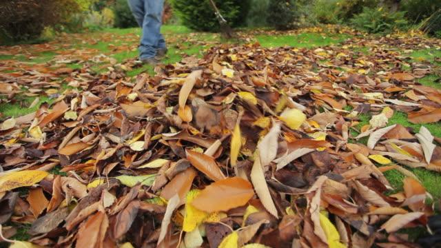 vídeos de stock e filmes b-roll de outono de limpeza - ancinho equipamento de jardinagem