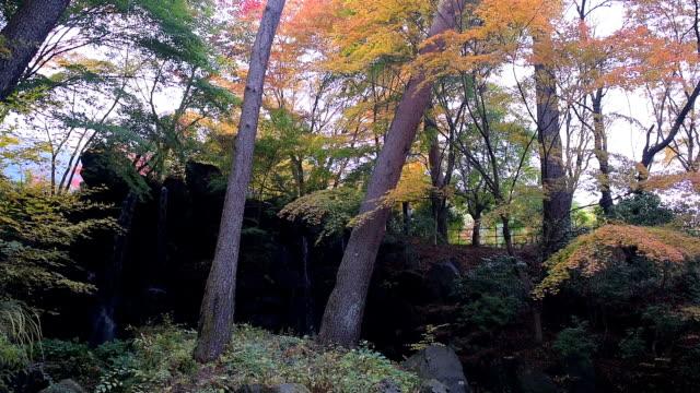 公園の紅色 - 硬木の木点の映像素材/bロール