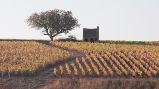 vídeos de stock e filmes b-roll de autumn color in the vineyards of sancerre, cher, france, europe - cena rural